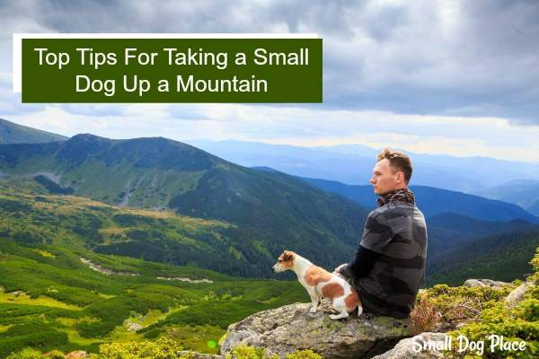 Top Tips for taking a small dog up a mountain.