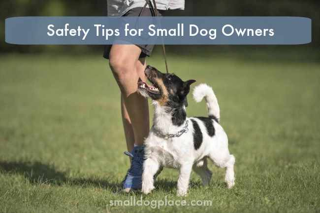 Safety Tips for Small Dog Owners