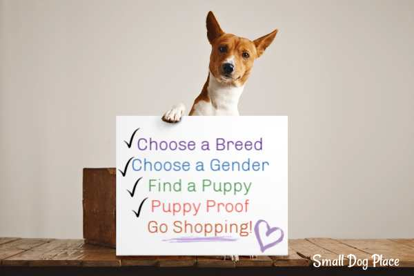 Small Dog Supplies