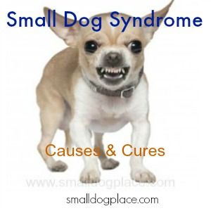 Prevent Small Dog Syndrome