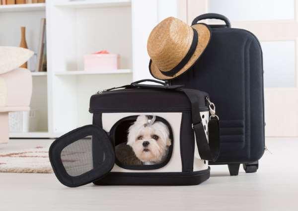 Small Dog Travel