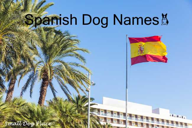 Spanish Dog Names:  A Spanish Flag in front of a tourist area
