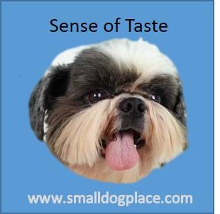Dog Sense of Taste