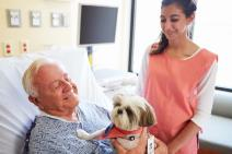 Therapy Dogs:  Does Your Dog Have What it Takes?