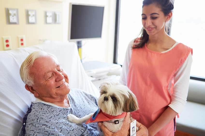 A therapy dog is comforting a man in the hospital