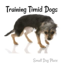 Training Timid Dogs Link