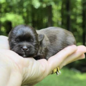 The World's Smallest Dog Breeds