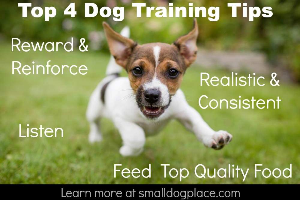 Top 4 Dog Training Tips