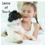 Dog Sense of Touch