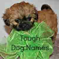 Tough Dog Names