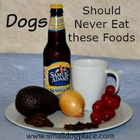 Foods Toxic to Puppies