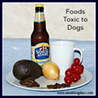 Foods and other substances you should never give to a dog