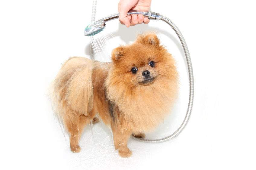 Training A Puppy For Grooming