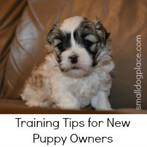Training a New Puppy