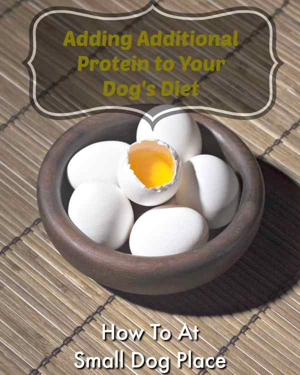 Adding Protein to an Underweight Dog's Diet