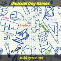 Unusual Dog Names