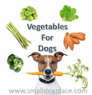 Great vegetables to feed to your dog.