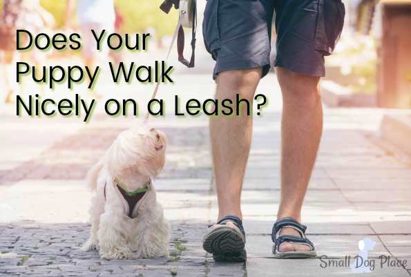 Dogs that Don't Walk Nicely on a Leash