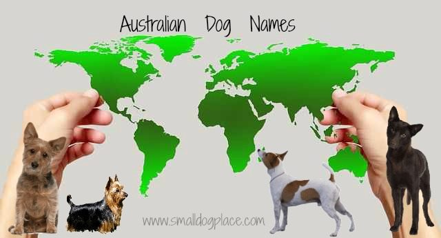 Australian Dog Names Map