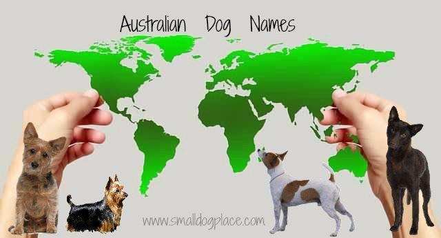Australian Dog Names Map