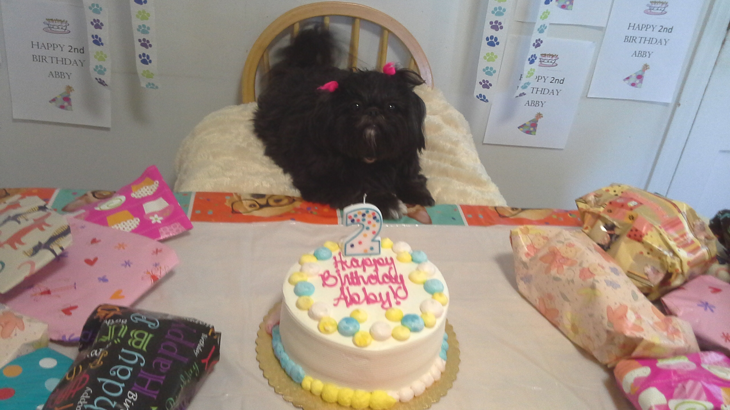 Signs Your dog is your baby:  You celebrate your pet's birthday: