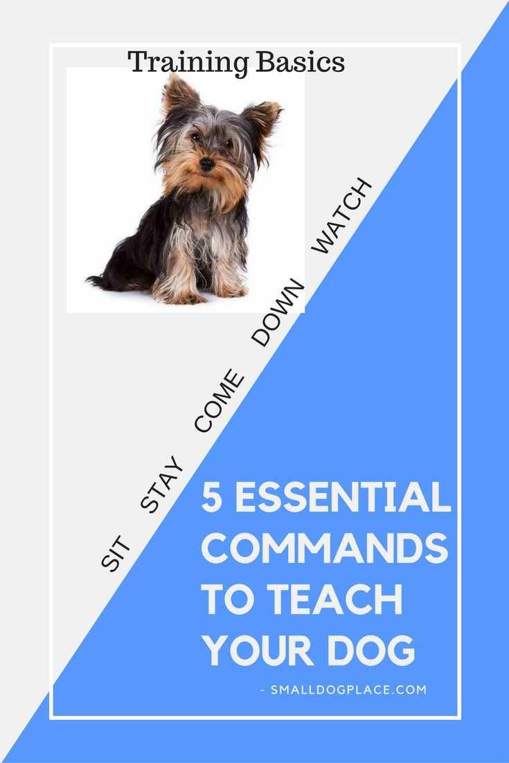 5 Basic But Timeless Makeup Techniques: 5 Basic Dog Commands Every Small Dog Should Know