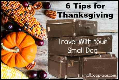 6 Tips for Thanksgiving Travel with Your Small Dog