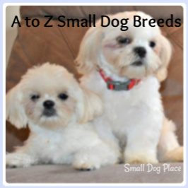 A to Z Small Dog Breeds