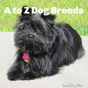 A to Z Dog Breed Profiles