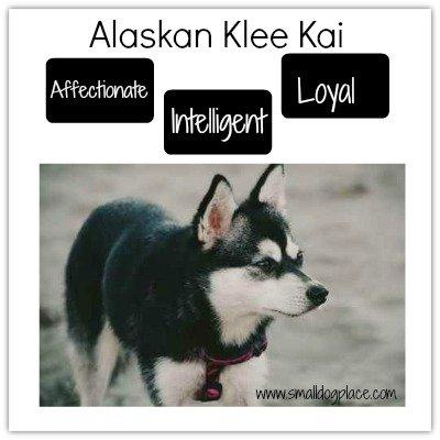 Alaskan Klee Kai Graphic