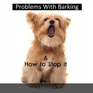 How to Reduce Your Dog's Yappiness
