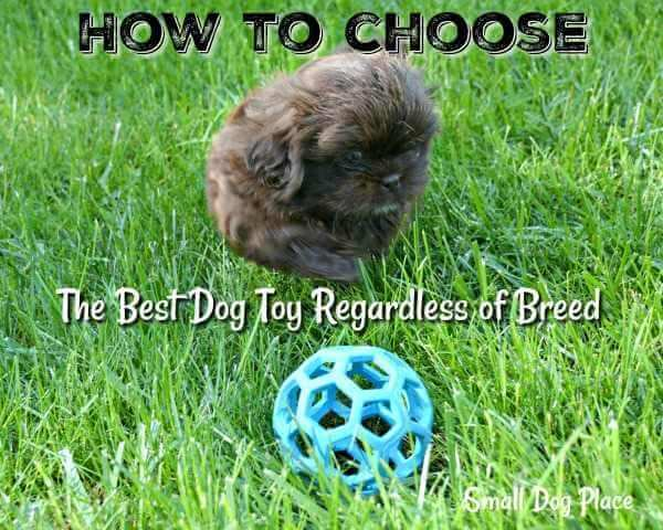 Choosing The Best Dog Toys Regardless of Breed