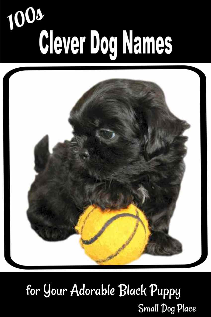 Great names for black dogs:  This little Shih Tzu Puppy has a paw on a basketball.