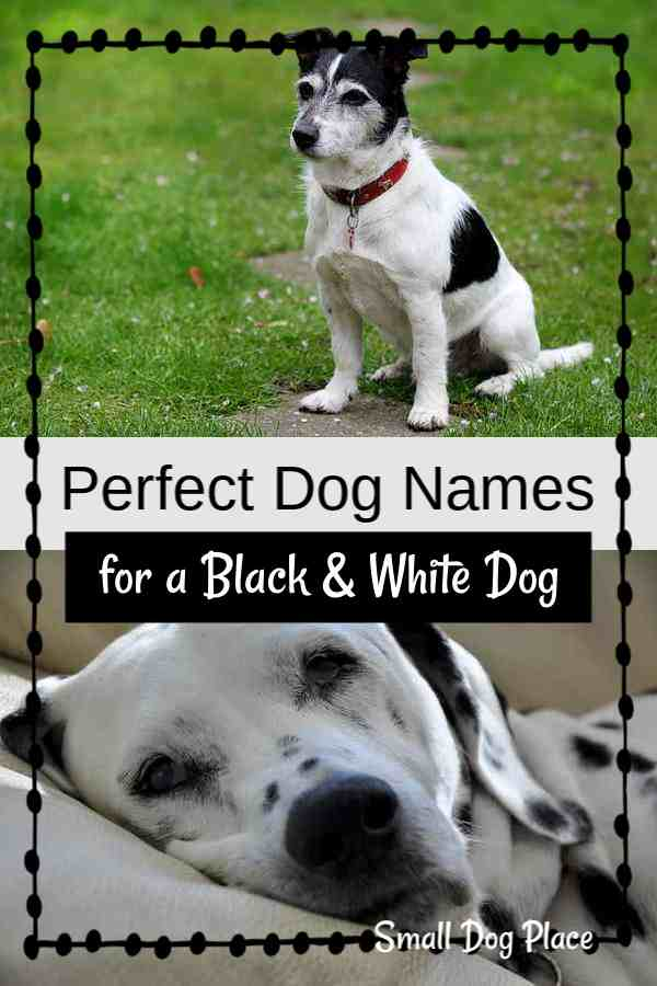 Great Black and White Dog Names