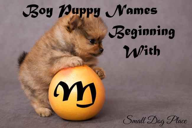 Boy Puppy Names Beginning with M