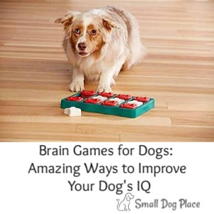 Brain Games for Dogs  Amazing Ways to Improve Your Dog's IQ Link