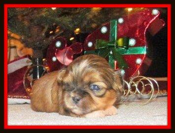 Christmas Dog Names based on Food and Drinks