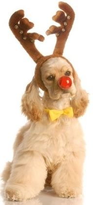 Remarkable Christmas Puppy Names Small Dog Place Easy Diy Christmas Decorations Tissureus