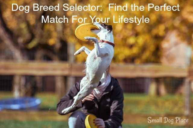 Dog Breed Selector:  Find the Perfect Match for Your Personality