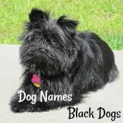 Dog Names for a Black Dog