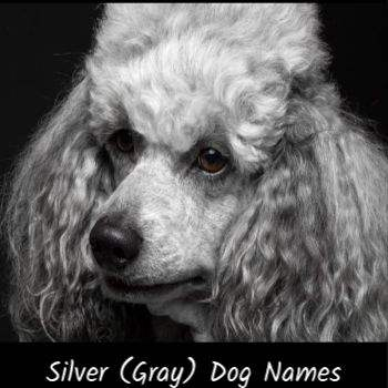 This page includes names for a gray, silver or blue dog