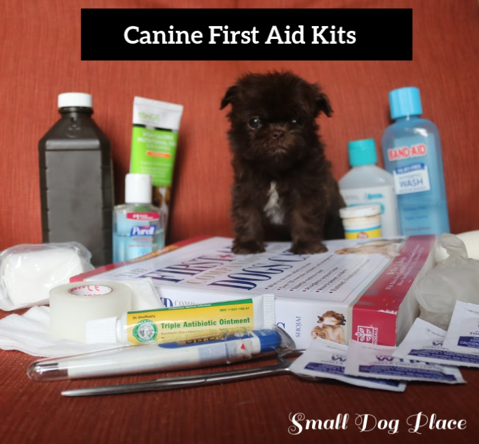 A Shih Tzu Puppy is posing in a collection of suggested first aid supplies for dogs.