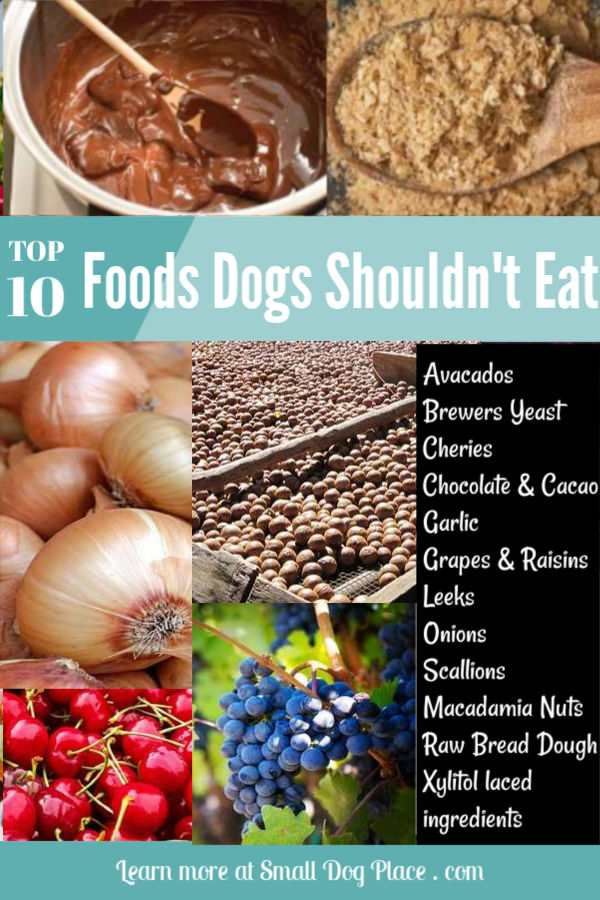 10 foods dogs should never eat.