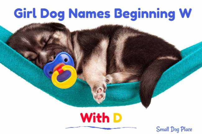 Girl Dog Names Beginning with D
