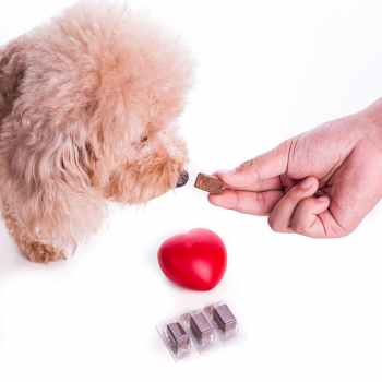All about Heartworms and how to prevent it