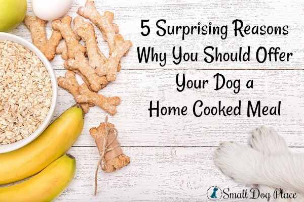 5 Surprising Reasons Why You Should Offer Your Dog a Home Cooked Meal