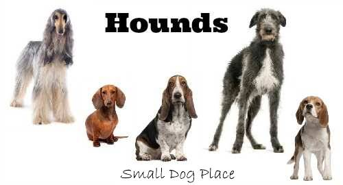 The AKC Hounds Group:  List of small dogs that belong to this grouping.