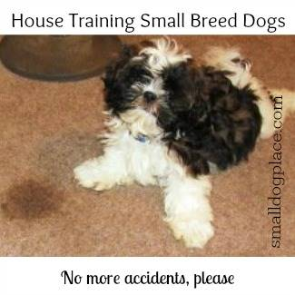 Housetraining Your Small Puppy