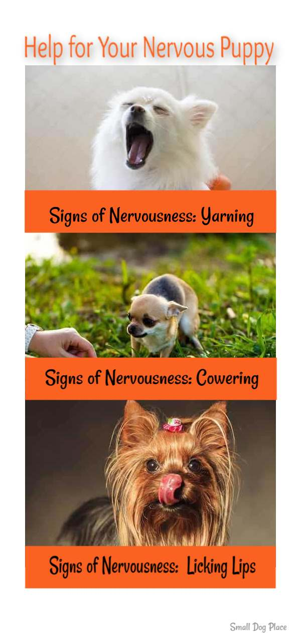 Signs You May Have a Nervous Puppy Pin:  Yarning, Cowering, Lip Licking