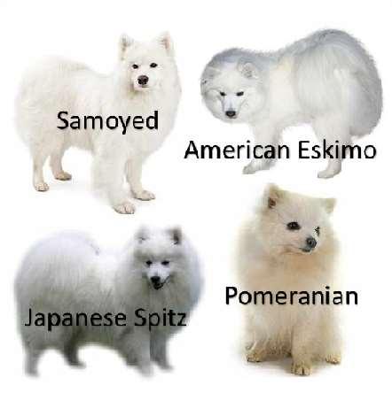 Nordic Spitz Breeds